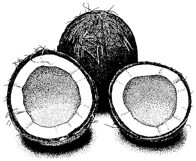 Homemade Coconut Milk Frugal Abundance