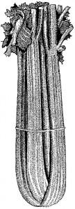 Celery Stalk