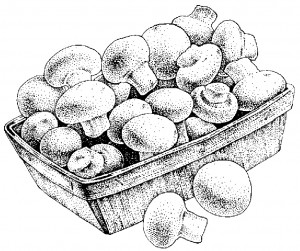 Whole Mushrooms