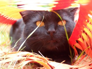 Abundance Of Cat S Claw
