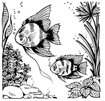 Self health care resources antibiotics frugal abundance for Fish mox amazon