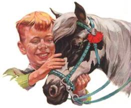 Ranch Pony